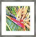 Hawaiian Bird of Paradise Framed Print
