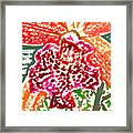 Hawaiian Orchid Framed Print
