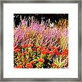Heather And Sedum Framed Print