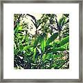Heliconia Cluster Framed Print