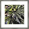 Hemp Framed Print