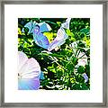 Hibiscus Garden Framed Print