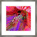 Hibiscus Macro Abstract Framed Print