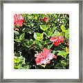 Hibiscus Tree Framed Print
