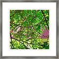 Hidden In The Garden Framed Print
