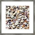 Honeymoon Island Shells Framed Print