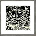 Hydra Framed Print