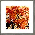 Hydrangea Macro In Autumn Framed Print