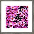 I Believe In Pink Daisies Framed Print