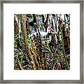 Ibis In The Swamp Framed Print