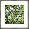 Ibises In A Tree Framed Print