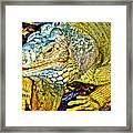 Iggy Framed Print