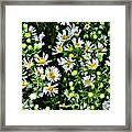 Illinois Wildflowers 1 Framed Print