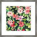 Impatiens Framed Print