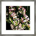 In Another Spring 2013 005 Framed Print