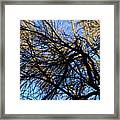 In Sunlight And In Shadow Framed Print
