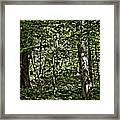 In The Woods Wc Framed Print