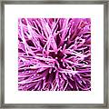 In Your Face Purple Framed Print