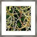 Inconspicuous Lizard Framed Print