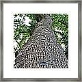 Independence Tree Framed Print