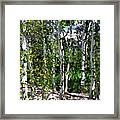 Into The Forrest Framed Print