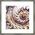 Into The Spiral Framed Print