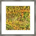 Invisible Nature Three Surreal C Framed Print