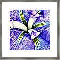 Iris 12 Framed Print