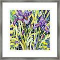 Iris Framed Print by Ann  Nicholson