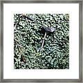 Iron Ivy Framed Print