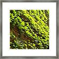 Ivy League-ivy Lines Framed Print