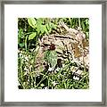 Jack In The Pulpit Stands Tall Framed Print