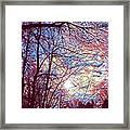 January Beauty 1 Framed Print