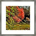 Joe-pye-weed Near Schroon River In New York Framed Print