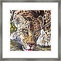 Just A Big Pussycat Framed Print