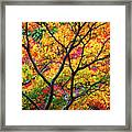 Kaleidoscope Of Autumn Color Framed Print