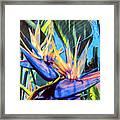 Kauai Bird Of Paradise Framed Print