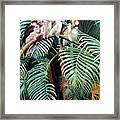 Kookaburra Perch Framed Print