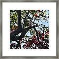Late Afternoon Tree Silhouette With Bougainvilleas I Framed Print