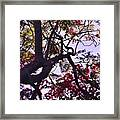 Late Afternoon Tree Silhouette With Bougainvilleas IIi Framed Print