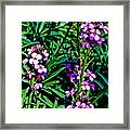 Verbena At Pilgrim Place In Claremont-california   Framed Print