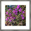 Lavender In The Wild Framed Print