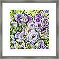 Lavender Ranunculus  Framed Print
