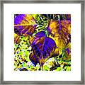 Lavish Leaves 3 Framed Print