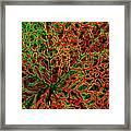 Leaf Segment Abstract Framed Print