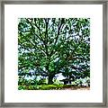 Leafy Tree Framed Print