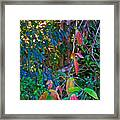 Leaves Changing Color As Autumn Approaches In Iguazu Falls National Park-argentina   Framed Print