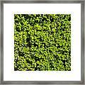 Privacy Hedge Framed Print