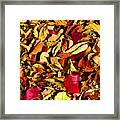 Leaves Of Autumn Framed Print