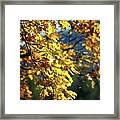 Leaves On Fire Framed Print